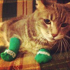Mean Green Kitty Courtesy Green P1