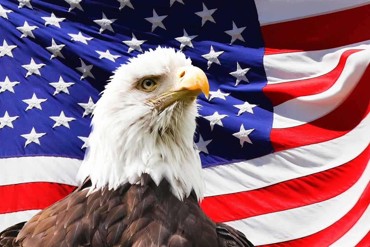 eagle-219679.jpg
